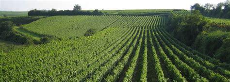 Aprende todo sobre la Agricultura Extensiva y mucho mas