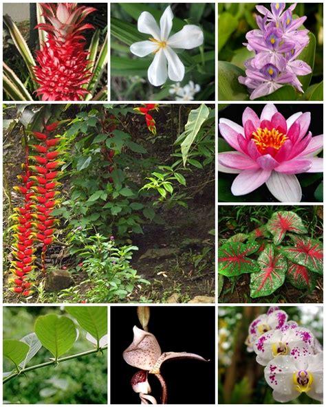 APUNTES   REVISTA DIGITAL DE ARQUITECTURA: Flores y ...