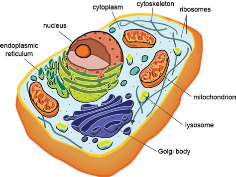 AQA A Level Biology  New Spec.    Cell Structure ...