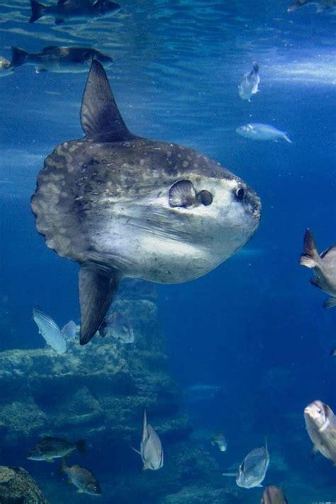 Aquarium Barcelona   Hotel Duquesa de Cardona Visitar el ...