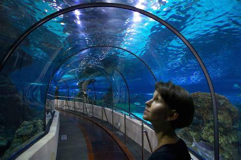 Aquarium de Barcelona, ¡conoce los secretos del mar ...