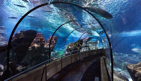 Aquarium de Barcelona: precios, horarios y cómo llegar