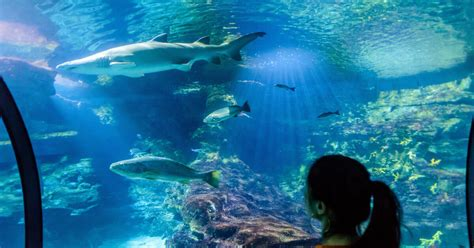 Aquarium de Barcelona: ticket de acceso sin colas ...