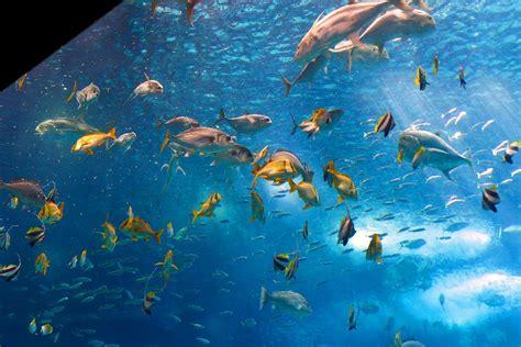 Aquarium de Lisbonne   Régions de Lisbonne et Alentejo ...