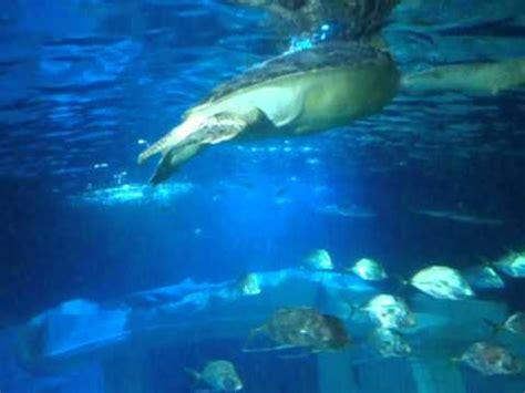 aquarium de porto portugal sea life.AVI   YouTube