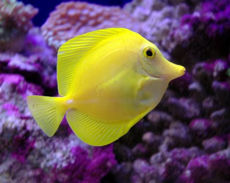 Aquarium fishes Buy aquarium fish in Chennai Tamil Nadu ...