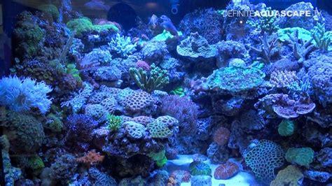 Aquarium Ideas from InterZoo 2012   DeJong Marinelife ...