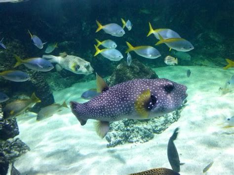 Aquarium La Rochelle   2019 All You Need to Know Before ...