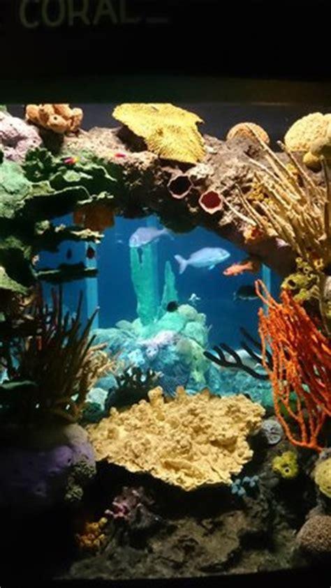 aquarium lisbonne   Picture of Lisbon Oceanarium, Lisbon ...