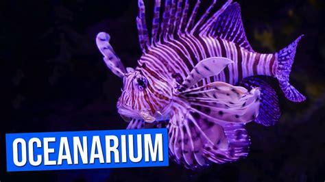 Aquarium  Oceanarium  de Lisbonne | Aquarium Lisbon ...