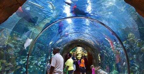 Aquarium of the Americas   Hometown Tourist