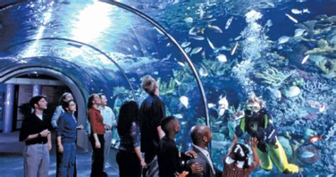 Aquarium of the Americas in New Orleans, Louisiana. What a ...