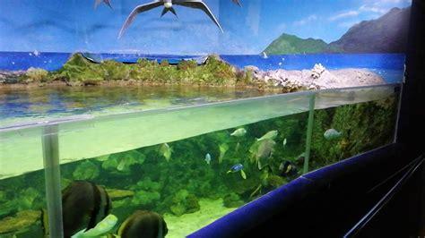 Aquarium zoo madrid   YouTube