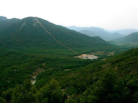 Árboles de España: El gran bosque mediterráneo