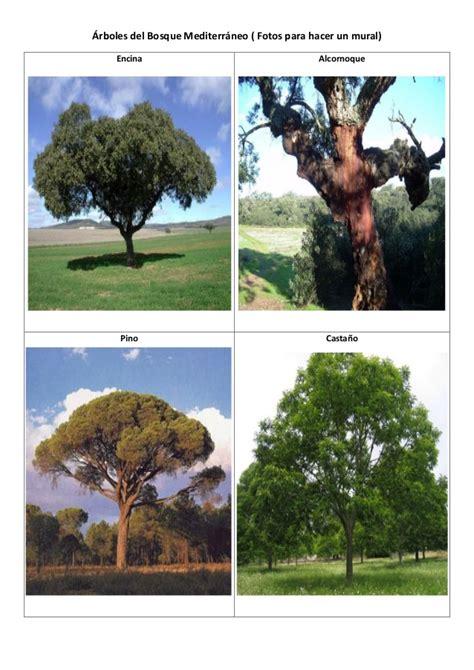 árboles del bosque mediterráneo. fotos mural
