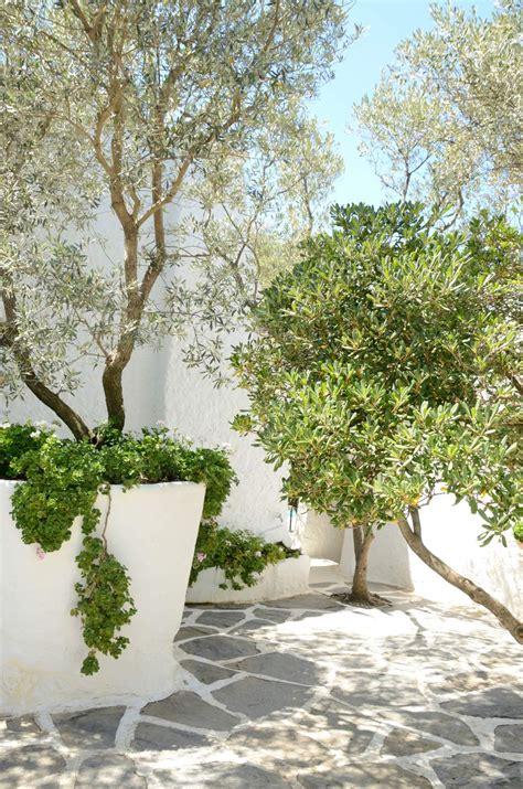 Árboles en maceta, una buena solución para terrazas y patios