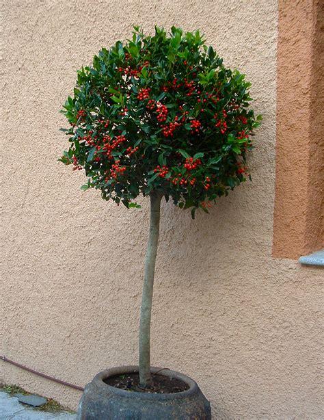 Árboles ornamentales para Jardines pequeños | Plantas y Jardín