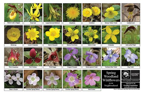Arboretum Books, Journals, Biodiversity Sheets and ...