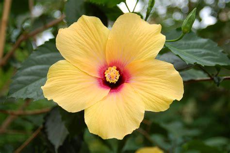 Arbustos con flores que se pueden usar para interiores ...