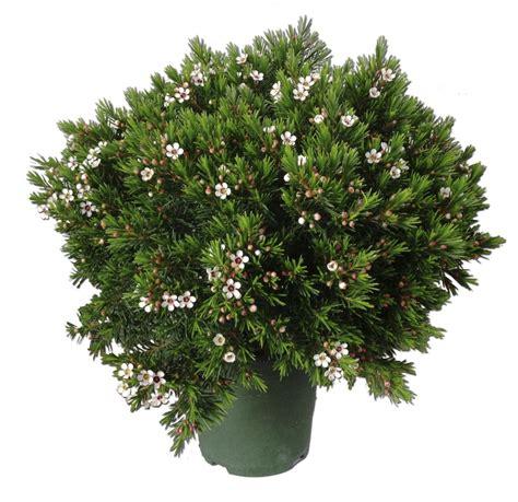 Arbustos   El Torruco