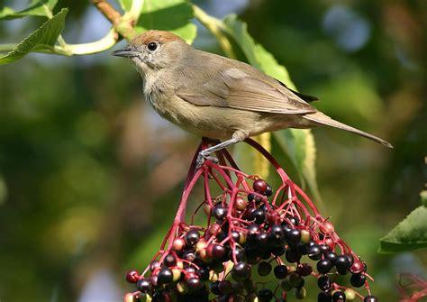 Arbustos y pájaros | Florpedia.com