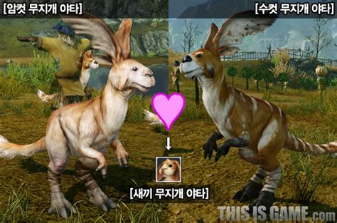 ArcheAge – Breeding feature added into game | MMO Culture