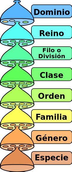 Archivo:Categorias taxonomicas es.svg   Wikipedia, la ...