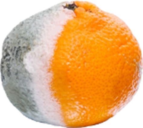 Archivo:Naranja Infobol.png   Wiki Elika