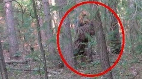 Are There Bigfoot Portals In Southern Oregon? | Paranormal