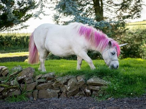 Are Unicorns Real? | Marie Claire
