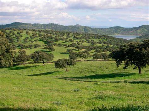 Área de bosque mediterráneo en aumento pero peligra cada ...