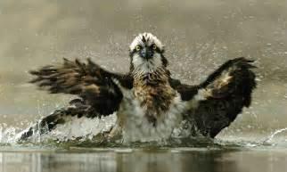 Arona inaugura hoy una exposición fotográfica sobre 'Aves ...