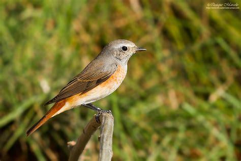 Arranca el III Atlas de aves reproductoras de España   SEO ...