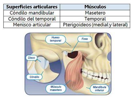 Articulación temporomandibular: trastornos y tratamiento