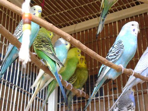 Artículo: Aves, más bellas en su hábitat