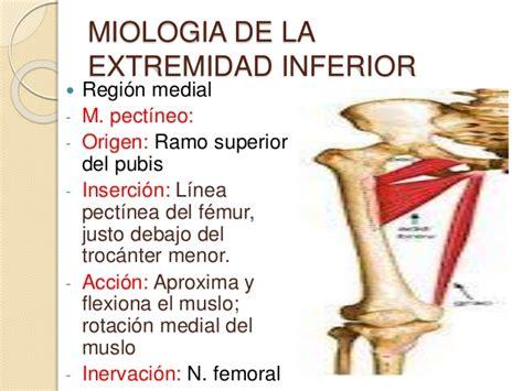 Artrologia y miologia de la extremidad inferior