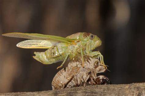 Artrópodes  Filo Arthropoda    Biologia   InfoEscola