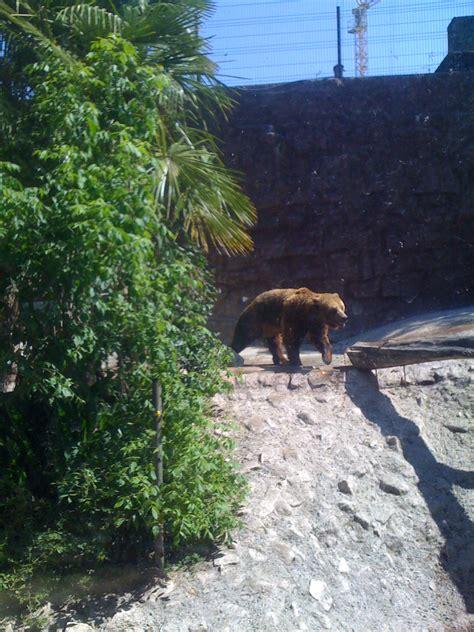AS PEQUENAS FLORES AZUIS: Visita de estudo ao Zoo da Maia