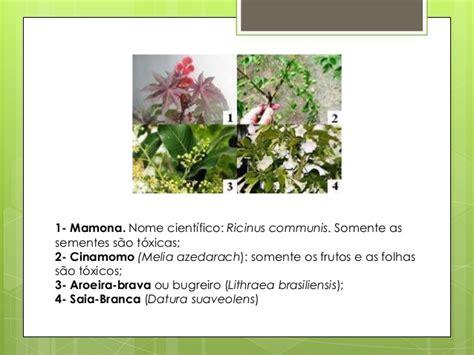 As plantas   Imagens de diferentes tipos de plantas