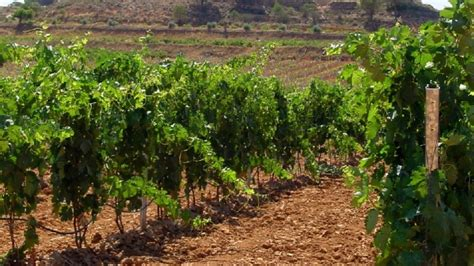 Asaja Rioja solicita al Ministerio de Agricultura que ...