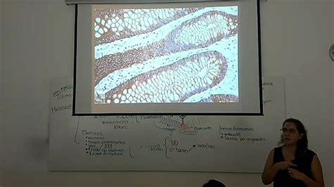 Asesorías 1er Bloque   Microscopía y...   Departamento de ...