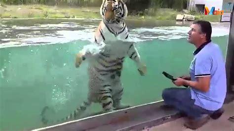 Asha   Zoo da Maia   YouTube