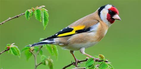 Así ve el mundo un pájaro   ¡No sabes nada!