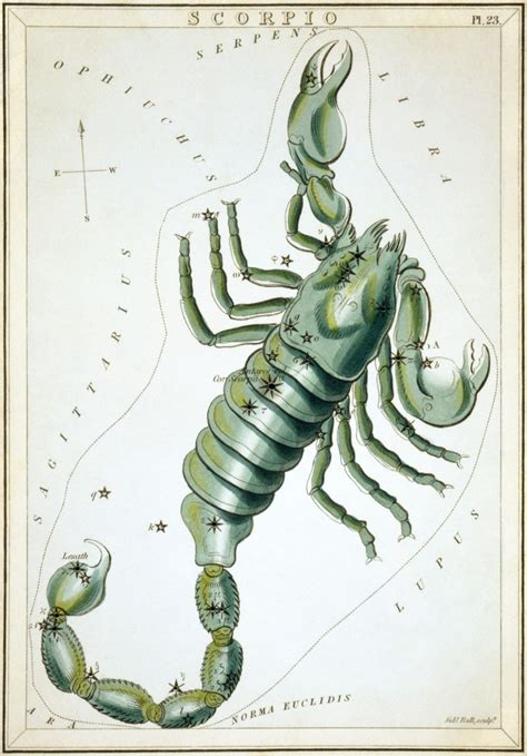 Astrology Sun Signs: Scorpio the Mysterious   Exemplore