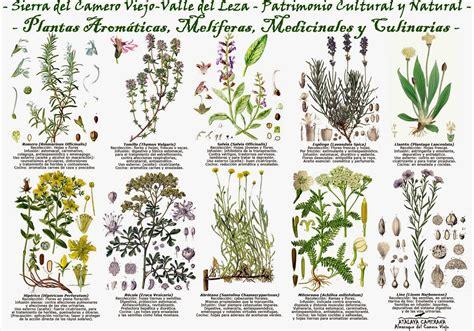 Atalaya Camerana   Almanaque del Camero Viejo: Plantas ...
