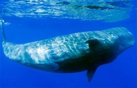 Atlantic Ocean Animals | Facts About Animals