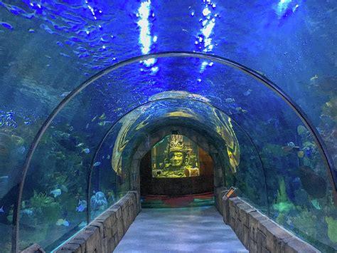 Audubon Aquarium, New Orleans Photograph by Art Spectrum