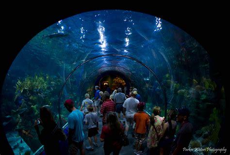 Audubon Aquarium, New Orleans, USA – Extreme Outdoor ...