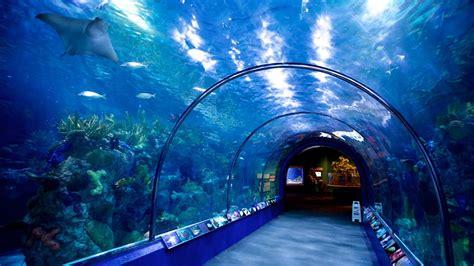 Audubon Aquarium of the Americas in New Orleans, Louisiana ...