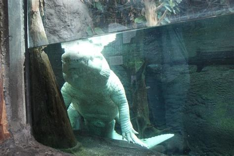 Audubon Aquarium of the Americas  New Orleans    All You ...